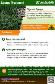 how to kill u0026 get rid of spurge weed treatment u0026 control