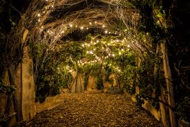 the images for u003e fairy lights forest