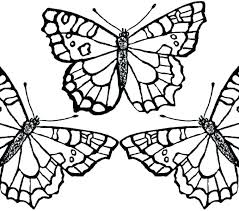 detailed butterfly coloring pages for adults butterfly coloring pages for adults butterfly coloring pages for