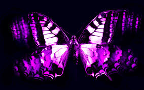 hd animated butterfly wallpaper