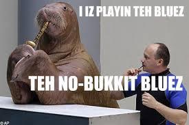 Meme Bucket - lolrus know your meme