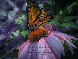 butterfly poems and sayings wish upon a butterfly