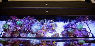 current usa orbit marine aquarium led light something fishy aquarium supplies lighting current usa