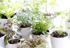 indoors garden gardening indoors over the winter planet natural