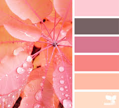 Peach Color by Autumn Glow Seeds Autumn And Design Seeds