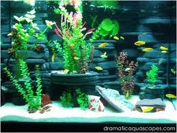 Diy Aquascape Dramatic Aquascapes Diy Aquarium Background Kodey Turner In