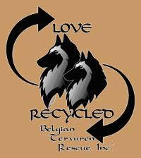 belgian sheepdog rescue florida tervuren rescue abtc 2013 abtc