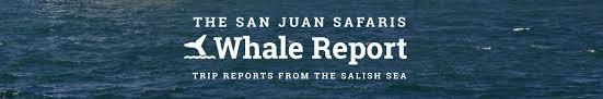 Top 25 Best San Juan by Welcome To The Whale Report Blog San Juan Safaris San Juan