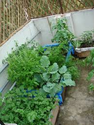 balcony vegetable garden image how to have a balcony vegetable