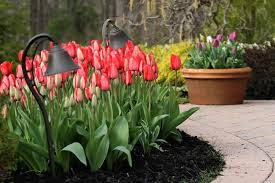 tulip suppliers show innovative varieties and combinations to get