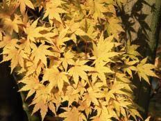 evergreen shrubs for year long color types of shrubs hgtv