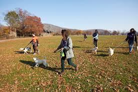 rei thanksgiving subaru encourages dog lovers everywhere to enjoy the great
