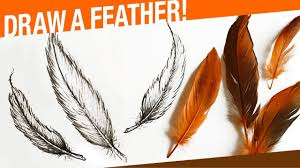 how to draw a feather youtube