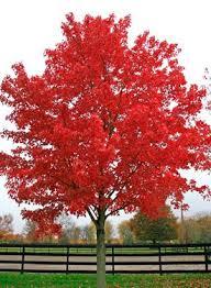 best 25 trees ideas on trees beautiful aspen trees