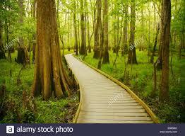 South Carolina national parks images Boardwalk loop congaree national park south carolina stock photo jpg