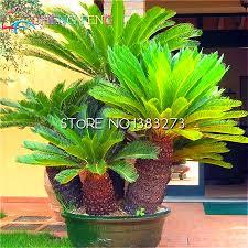 Cheap Flower Seeds - online get cheap discount flower seeds aliexpress com alibaba group