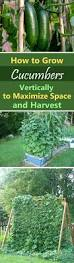 431 best raised bed vegetable gardening images on pinterest