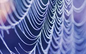halloween spider web background wet spider web full hd wallpaper and background 1920x1200 id