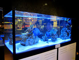 aquarium design ideas home decor gallery coffee table loversiq