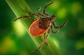 tick u0026 mosquito treatment services boston ma ultra safe pest