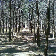 Oklahoma forest images 740 best oklahoma where the wind come sweeping down the plains jpg
