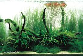 amano aquascape driftwood aquascape best of driftwood q a with takashi amano