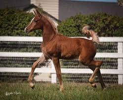 786 horses images horses silver draft horses