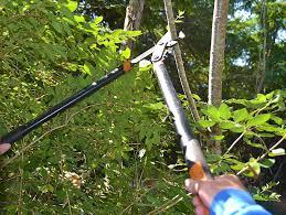 tree branch coat rack how to make a diy coat hanger