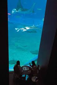 okinawa diverse marine life at the aquarium news stripes