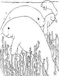 sea plants coloring pages manatee coloring mammals coloring pages manatee by jadedragonne