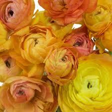 fresh cut flowers ranunculus fresh cut flower