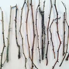 Decor Sticks In A Vase Thorn Branches Dried Rose Stems For Vases And Home Decor