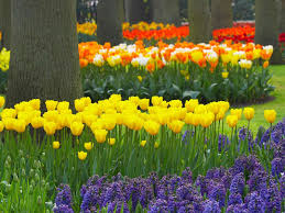 flower garden layout best types of flowers pretty pictures garden arafen