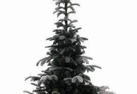 8ft snowy nordmann fir life like artificial christmas tree hayes