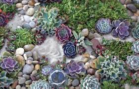Best Rock Gardens Fern Rock Garden Design Hotels Of Albuquerque