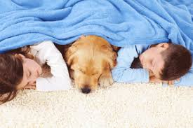 pets should feel at home best flooring for you them acme chem