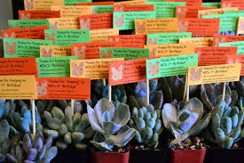 1st birthday party favors mj s 1st birthday party favors the republic of succulents