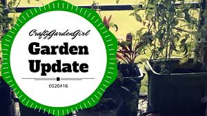 Self Watering Patio Planters by Self Watering Planters In Patio And Rainwater Youtube