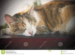 Cat Instagram Lazy Cat Instagram Effect Stock Photo Image 49326245