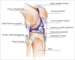Anatomy Of Knee Injuries Knee Pain Symptoms Causes Treatments For Relief Or Injury Repair