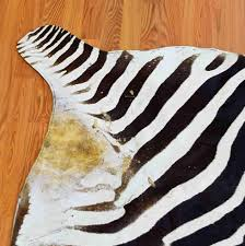 Animal Skin Rugs For Sale Burchell U0027s Zebra Skin Rug For Sale Sw3014 Safariworks