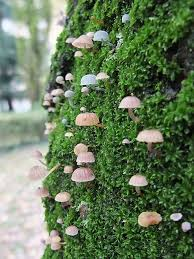 Types Of Garden Mushrooms - mushrooms on moss i would say the fairies would love to jump on