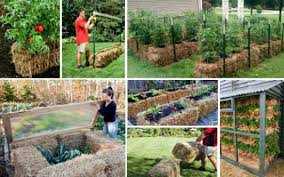 straw bale gardening instructions best idea garden