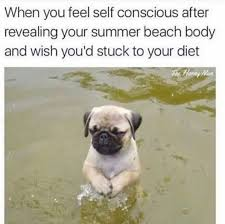 Beach Body Meme - 25 pug meme jokes that will fill your hearts with happiness