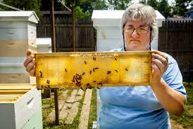 south euclid couple keep busy as bees with backyard honey business