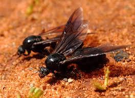 queen ants for sale antscanada