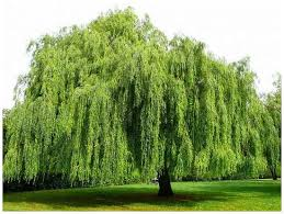 surprising facts you didn t about trees