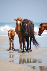 704 best obx images on pinterest beach vacations family