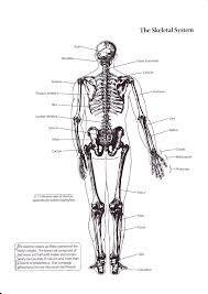 basics of human skeletal system www oustormcrowd com
