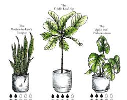 common houseplants with pictures secret to healthy looking house
